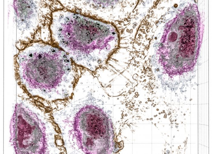 Researchers Investigate the Toxicity of Nanoparticles Using Tomographic Microscopy