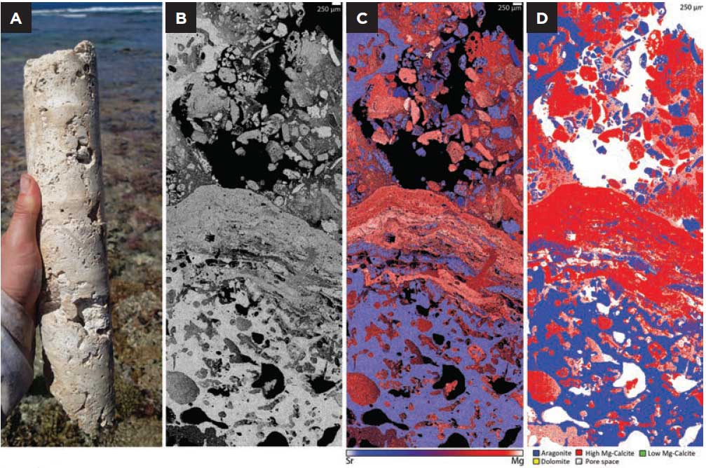 Heron reef sampes ananlysed using the TESCAN TIMA automated mineralogy system