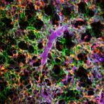 WEBINAR – Real-Time Intravital Micrsocopy Imaging of Internal Organs in Live Animal Models