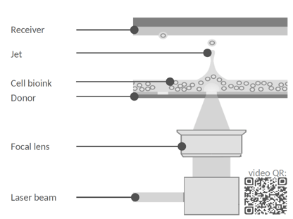 laser assisted bioprinting schematic - poietis